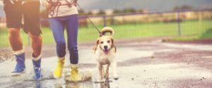 DogSitter : se faire de l'argent en gardant des chiens