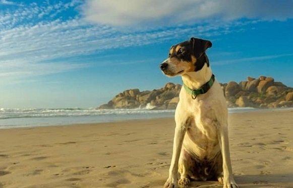 Petsitting : gagner de l'argent en gardant des animaux