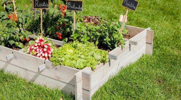 location de jardin : partager un potager