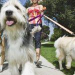 Pet-Sitting – Gagnez de l'argent en gardant des animaux